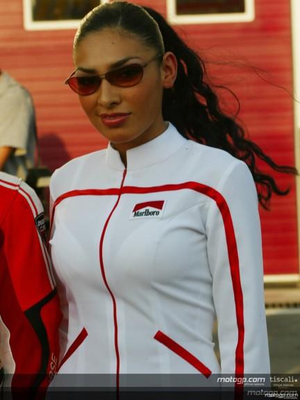 Paddock girls - Qatar