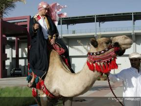 Riders swap bikes for camels ahead of the Qatari GP