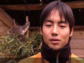 H. Aoyama acknowledges Abe influence