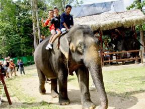 Riders visit Malaysian elephant sanctuary