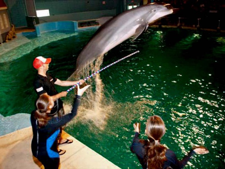 Kenny Noyes with a dolphin at Indianapolis Zoo