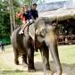 Quatre pilotes découvrent le refuge d'éléphants de Kuala Gandah