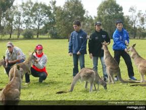 I piloti del Motomondiale fanno visita ai canguri di Phillip Island