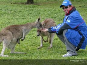 Les pilotes rendent visite aux kangourous