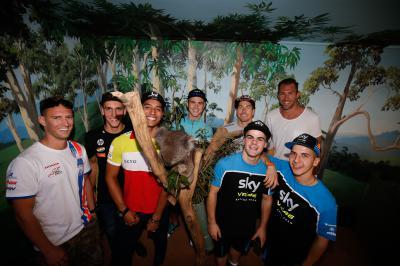 In der Australischen Wildniss